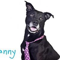 Adopt A Pet :: *DANNY - Sacramento, CA