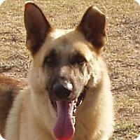 Adopt A Pet :: Samuel - Dripping Springs, TX