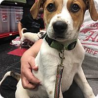 Adopt A Pet :: Romeo - Prior Lake, MN
