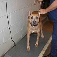 Adopt A Pet :: EGYPT - Aurora, IL