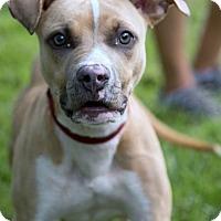 Adopt A Pet :: Mikey - Jupiter, FL