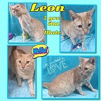 Adopt A Pet :: Leon - Siler City, NC