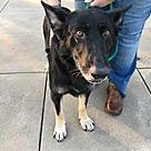 Adopt A Pet :: Santana