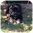 Photo 2 - Cocker Spaniel Dog for adoption in Tacoma, Washington - Loki