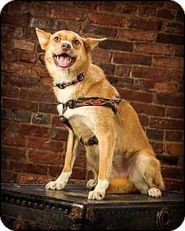 Shepherd (Unknown Type) Mix Dog for adoption in Owensboro, Kentucky - Trudy