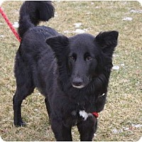 Adopt A Pet :: Black Beauty - Blooming Prairie, MN