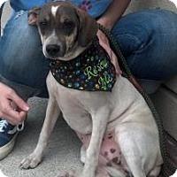 Adopt A Pet :: Olivia - Rockaway, NJ