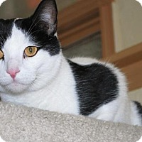 Adopt A Pet :: Loki - Prescott, AZ