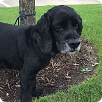 Adopt A Pet :: Timmy - Sugarland, TX