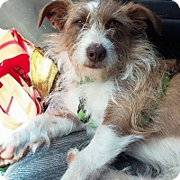 Adopt A Pet :: Einstein - Ft. Collins, CO
