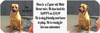 Boxer Mix Dog for adoption in Greenville, Kentucky - Hoss