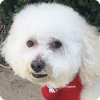 Adopt A Pet :: Timmy - La Costa, CA