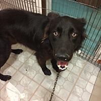 Adopt A Pet :: Lucas - San Ysidro, CA