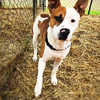 Adopt A Pet :: Willie - Bonaire, GA