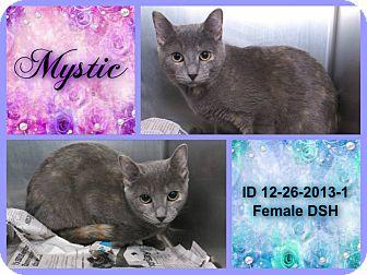 Calico Cat for adoption in Rowlett, Texas - Mystic