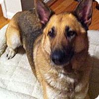 Adopt A Pet :: Xena - Pike Road, AL