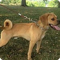 Adopt A Pet :: Tao - Palmyra, WI