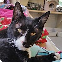 Adopt A Pet :: Carolina - Mountain Center, CA