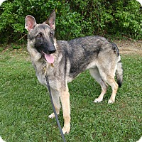 Adopt A Pet :: Rocky - Knoxville, TN