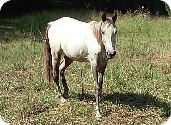 Quarterhorse Mix for adoption in cumming, Georgia - Tink