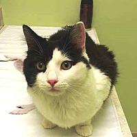 Adopt A Pet :: Clancy - Tampa, FL
