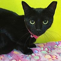 Adopt A Pet :: Keva - Houston, TX