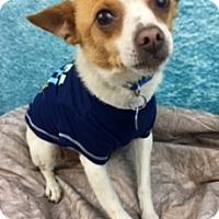 Adopt A Pet :: Oscar - Lake Elsinore, CA