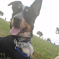 Adopt A Pet :: Roscoe - Lockhart, TX