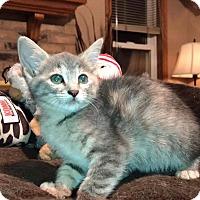 Adopt A Pet :: Lola - Daleville, AL