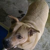 Adopt A Pet :: Fawn - Pembroke, GA