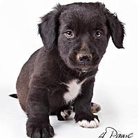 Adopt A Pet :: Macy - Lodi, CA