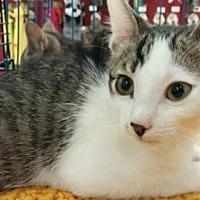 Adopt A Pet :: Markie - Vacaville, CA