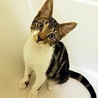 Adopt A Pet :: Simon - East Brunswick, NJ