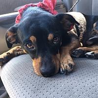 Adopt A Pet :: Henry - Redondo Beach, CA