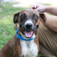 Adopt A Pet :: ERIKA - Kyle, TX