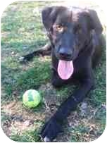 Labrador Retriever Mix Dog for adoption in Torrance, California - Damon