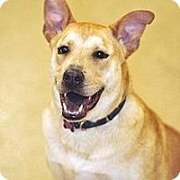 Adopt A Pet :: Rufus - Scottsdale, AZ