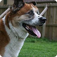 Adopt A Pet :: Beniko - Virginia Beach, VA