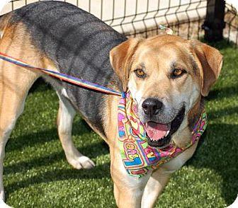 Hound (Unknown Type)/German Shepherd Dog Mix Dog for adoption in Cumming, Georgia - Scooter
