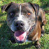 Adopt A Pet :: Bob - Ventura, CA