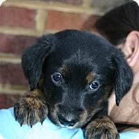 Adopt A Pet :: Martha - Knoxville, TN