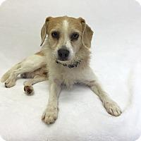 Adopt A Pet :: Scuttle - Mission Viejo, CA