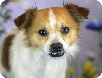 Terrier (Unknown Type, Small) Mix Dog for adoption in LAFAYETTE, Louisiana - KANE