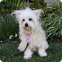 Adopt A Pet :: ROBINSON - Newport Beach, CA