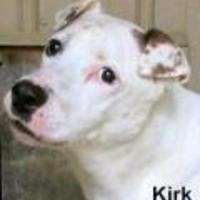 Adopt A Pet :: Kirk - Tahlequah, OK