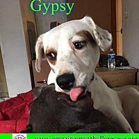 Adopt A Pet :: Gypsy - Pensacola, FL