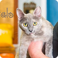 Adopt A Pet :: Halo - Somerset, PA