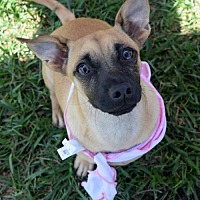 Adopt A Pet :: Lemon Chiffon - San Diego, CA