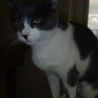 Adopt A Pet :: Fanta - Hamburg, NY
