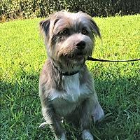 Adopt A Pet :: Fuji - Simpsonville, SC